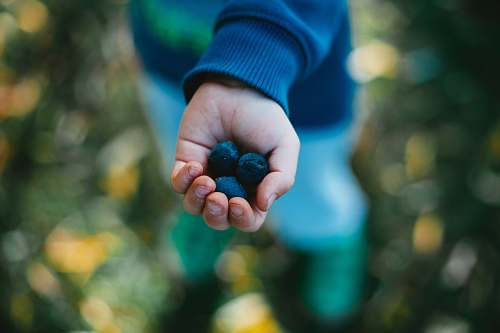 plant shallow focus photography unknown person holding blueberries blueberry