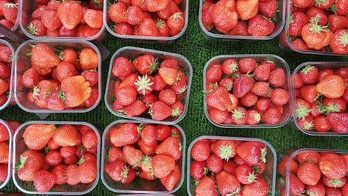 fruit strawberries in clear pack lot strawberry