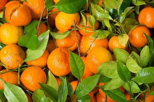 fruit tangerine fruits citrus fruit