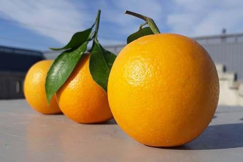 orange three round orange fruits on gray table citrus fruit