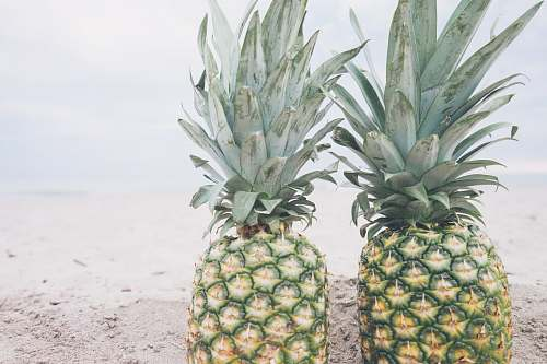 fruit two pineapple fruits pineapple