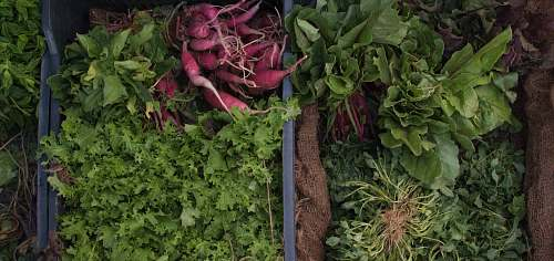 produce variety of green vegetables vegetable