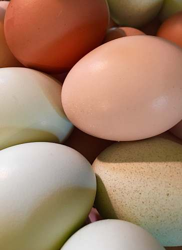 egg white and chicken eggs easter egg