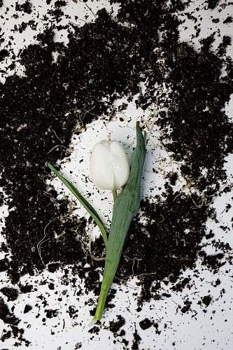 plant white-petaled flower egg