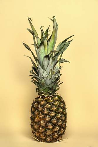 plant yellow and green pineapple pineapple
