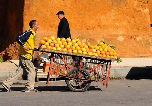 food  citrus fruit