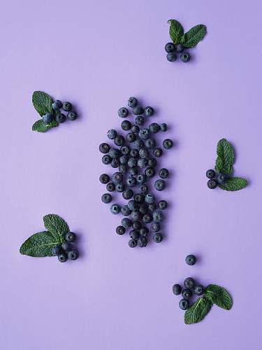 blueberry black berries plant