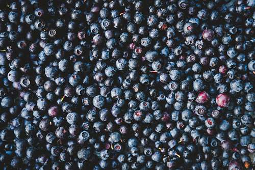 food blueberries fruit blueberry