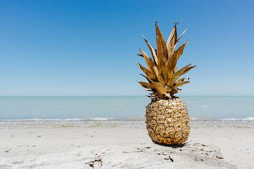 food brown pineapple fruit on seashore pineapple