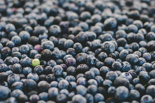 food bunch of blueberries blueberry