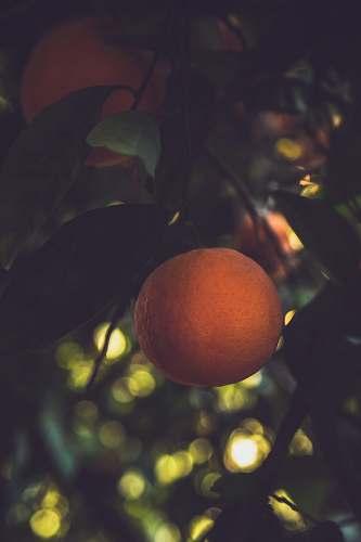 food orange fruit citrus fruit