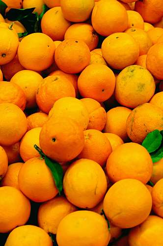 plant orange fruits on focus photography citrus fruit