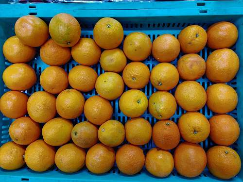 food pile of orange fruits inside blue plastic crate citrus fruit