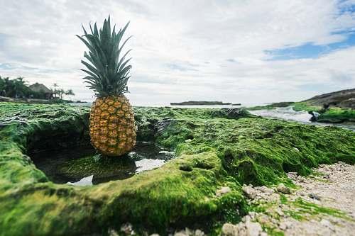 food pineapple fruit pineapple