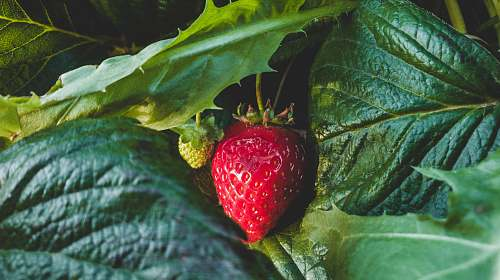 food strawberry fruit strawberry
