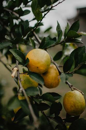 food yellow fruits plant