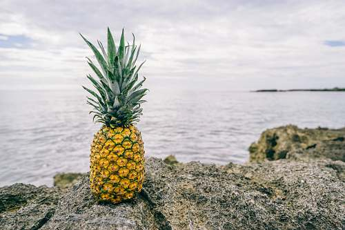 food photo of pineapple on rock fruit
