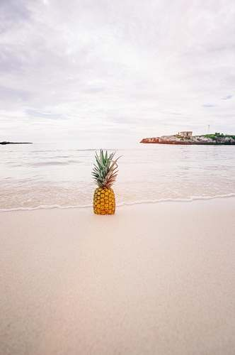 food pineapple on sand near beach fruit
