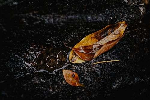 animal brown leaves on tree trunk leaf