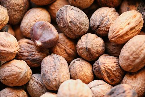 photo food brown walnut lot nut free for commercial use images