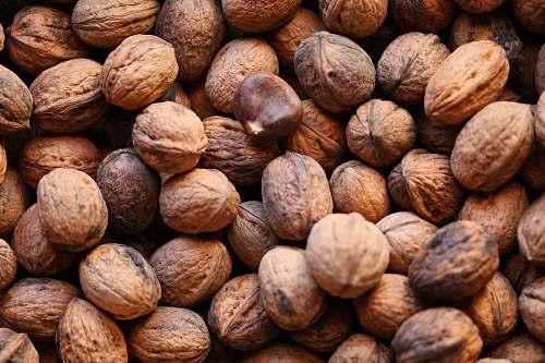 food brown walnuts walnut