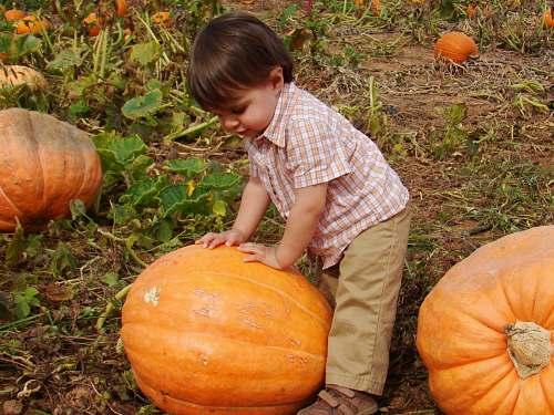 human child wearing brown pants holding orange pumpkin person