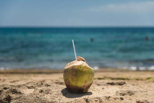 photo vegetable coconut beside body of water during daytime nut free for commercial use images