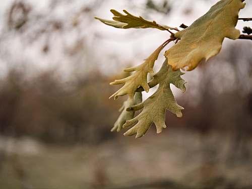 food green leaf tree produce
