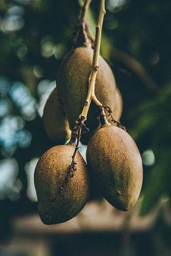 food mango fruits fruit