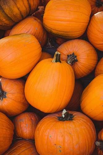 orange pile of orange pumpkin pumpkin