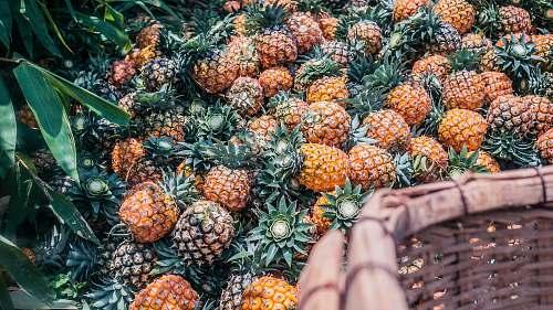 food pineapple fruit lot during daytime fruit