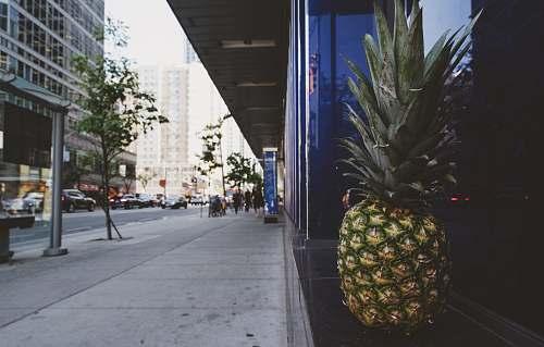 food pineapple on window pineapple