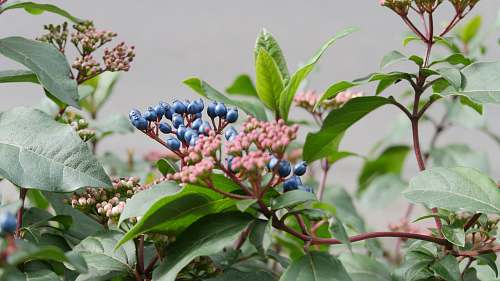food round blue and red petaled flowers blueberry
