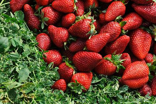 food red strawberries on grass field fruit