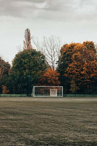 plant white soccer goal tree