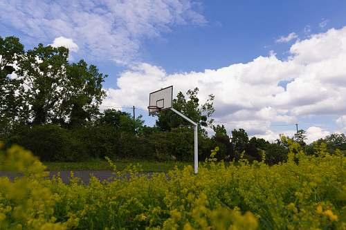 nature basketball court near trees grassland