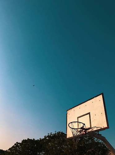 blue photo of white and black basketball hoops animal