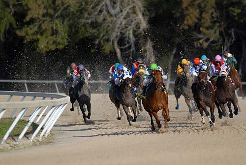 mammal shallow focus photography of horse race animal