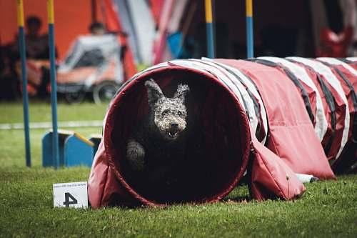 people dog on play tunnel baseball