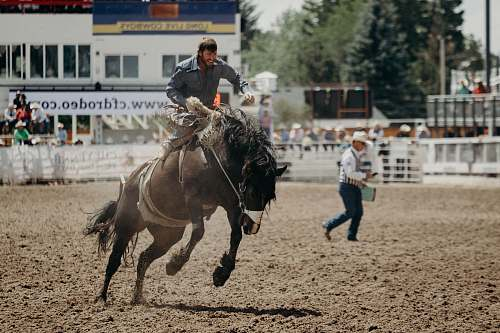 people man riding a horse rodeo