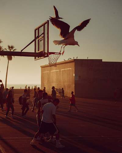 person people playing basketball during golden hour animal