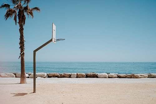 sports basketball hoop system near palm tree on shore team