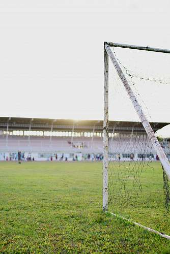 team white goalie net on green grass field football
