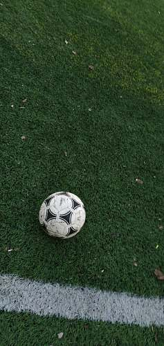 photo grey white and black soccer ball on grass team sport free for commercial use images