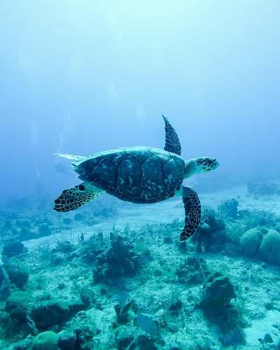 turtle  sea life