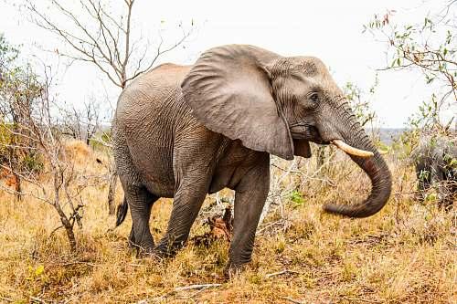 mammal adult elephant elephant