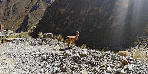 mammal animal standing on stones kangaroo
