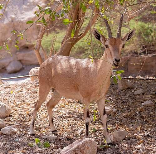 wildlife beige gazelle beside tree during day antelope