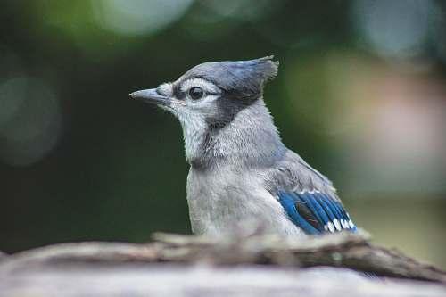 bird bird during day jay
