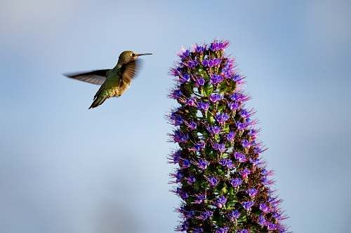 bird bird near purple petaled flowers christmas tree